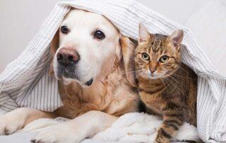 Dog cat safe at home